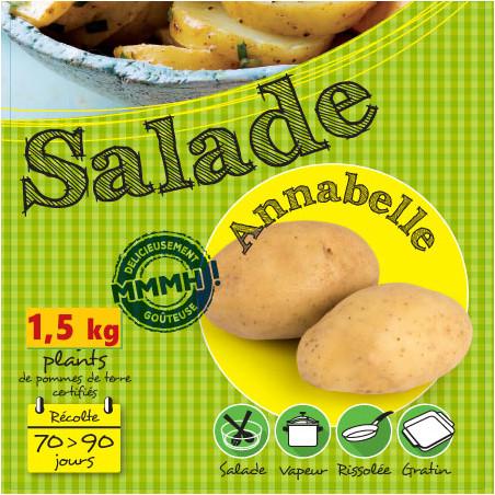 Plants de pomme de terre 1,5 kg d'Annabelle