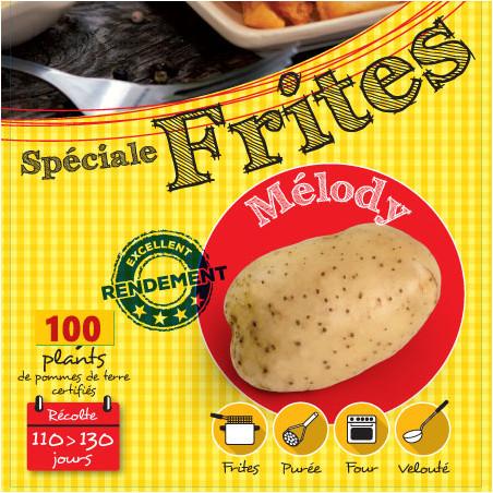 Mélody 100 Plants de pomme de terre