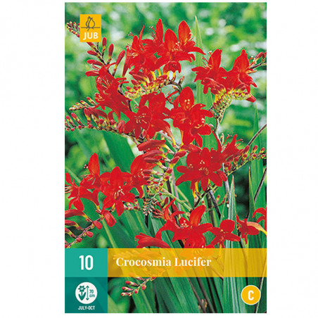 10 CROCOSMIA LUCIFER