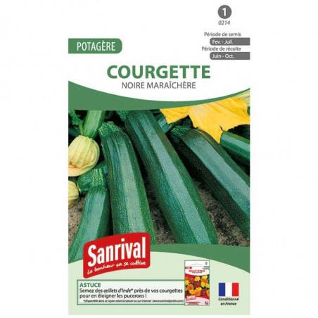 Graines de Courgettes