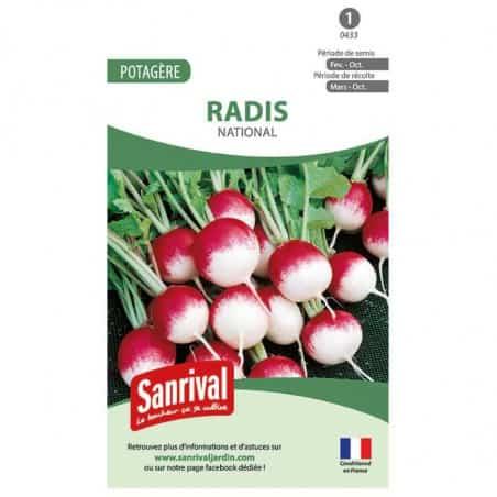 Graine de radis rond