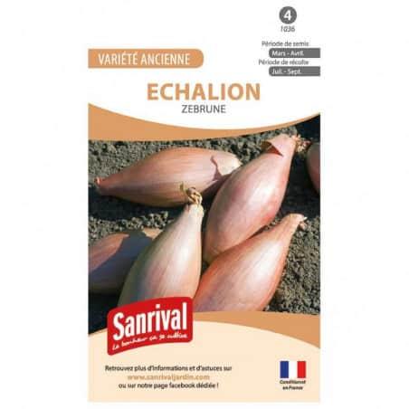 Graines d'Echalion