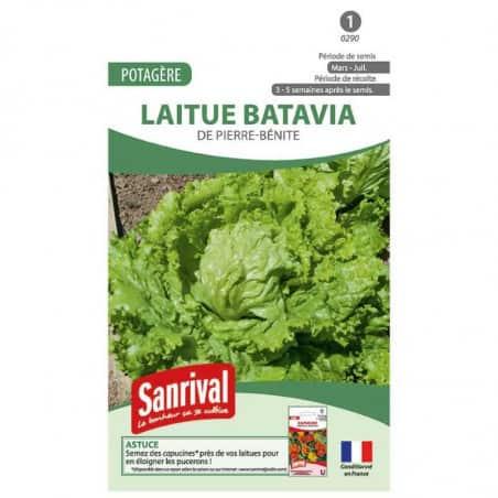 Graines de laitue Batavia Pierre Bénite