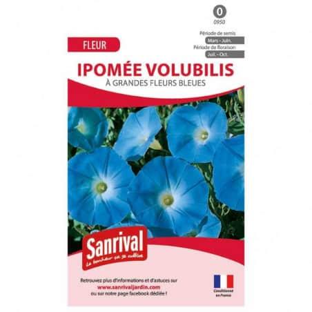 graines de Ipomée volubilis bleue