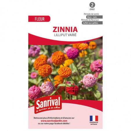 graines de Zinnia Lilliput varié