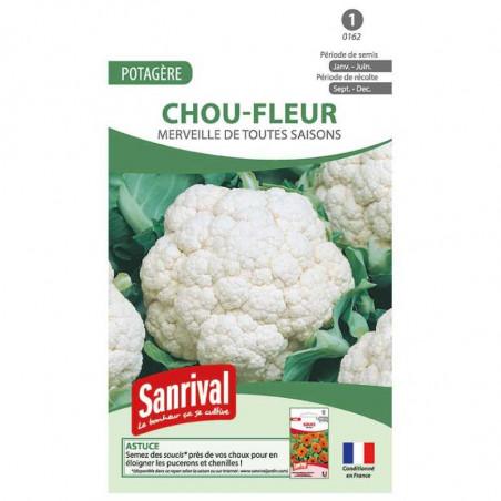 Graines Chou Fleur Toutes Saisons