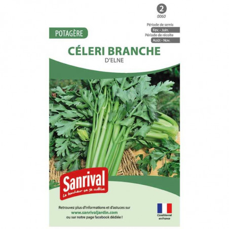 Graines Céleri Branche Elne
