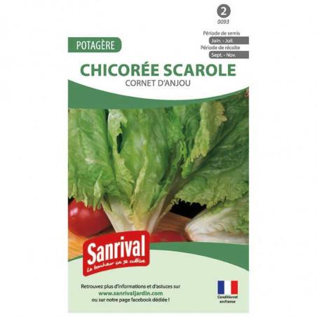 Graines Chicorée Scarole Cornet Anjou