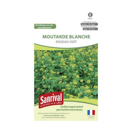 Graines Moutarde Blanche