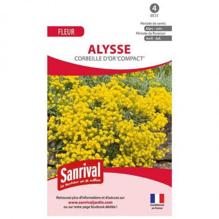 Graines Alysse Corbeille d'Or