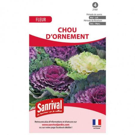 Graines Brassica - Chou d'Ornement