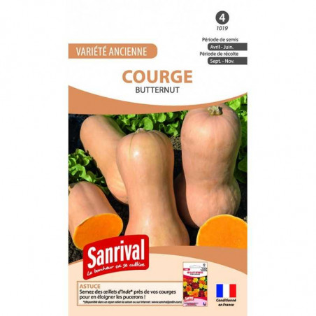 Graines Courge Butternut