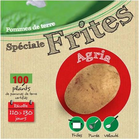 Agria 100 Plants de pomme de terre