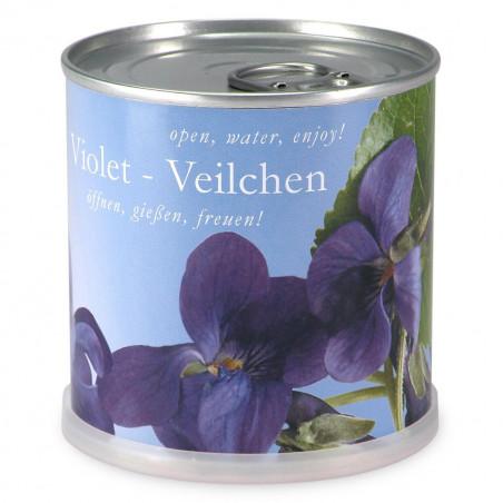 Violettes à faire pousser en boite