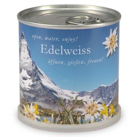 Edelweiss à faire pousser en boite