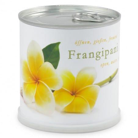 Frangipanier à faire pousser en boite