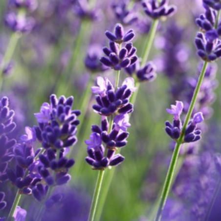 Kit découverte herbes de Provence
