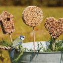 Graines pour oiseaux sur tige