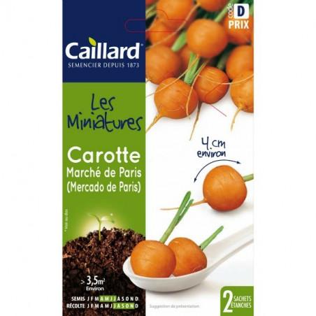 Graines mini carottes